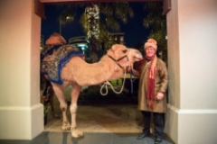 SHINE-WING_PROP-STORE_ENC_MOROCCAN_CAMEL-105-250x167